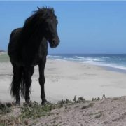 Wild horse on the island