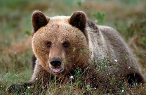 Wonderful bear