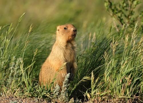 Wonderful groundhog