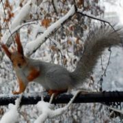 Wonderful squirrel