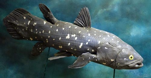 Amazing coelacanth