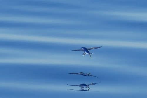 Awesome flying fish