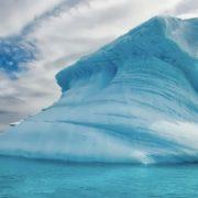 Cute Antarctica