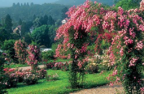 Garden of new varieties of roses