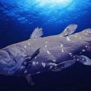 Majestic coelacanth