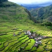 Rice terraces in the Philippine Cordillera