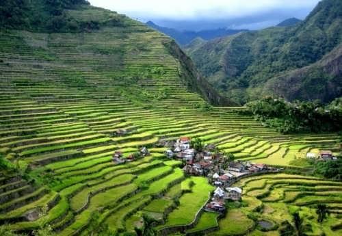 Rice terraces in the Philippine Cordillera