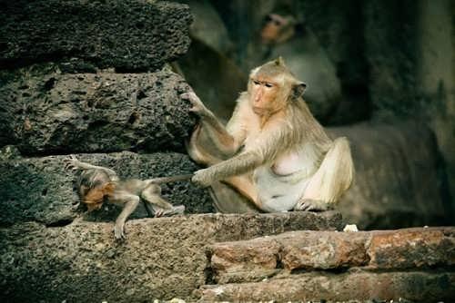 The city of monkeys