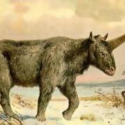 The last Siberian unicorn