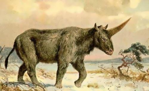 The last Siberian unicorn