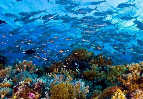 Tubbatacha Reef Marine Park
