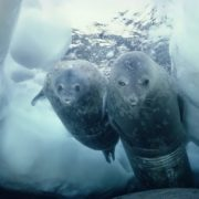 Wonderful seals
