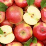 Apple Tree – Fruit Tree Royalty