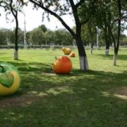 Apples in Gomel, Belarus