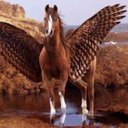 Awesome Pegasus