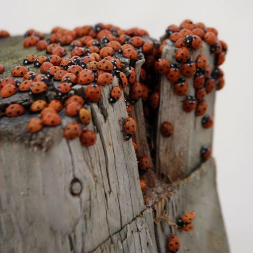 Ladybirds, Blokus, Denmark