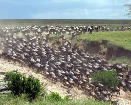 Migrating beasts