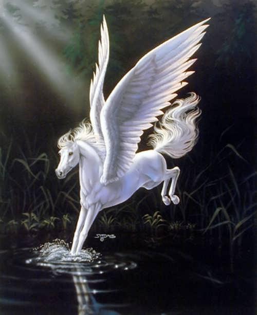 Stunning Pegasus