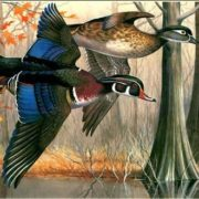 Wood ducks by Maynard Reece