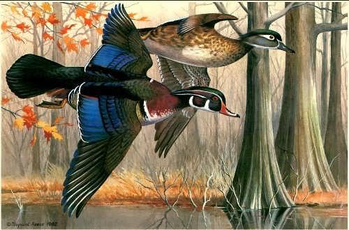 Wood ducks by Maynard Reece