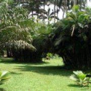Aburi Botanical Garden