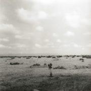 Arid savanna on the Kwahu plateau