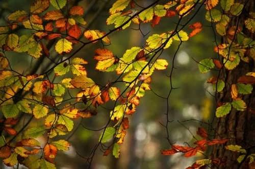 Colorful poplar