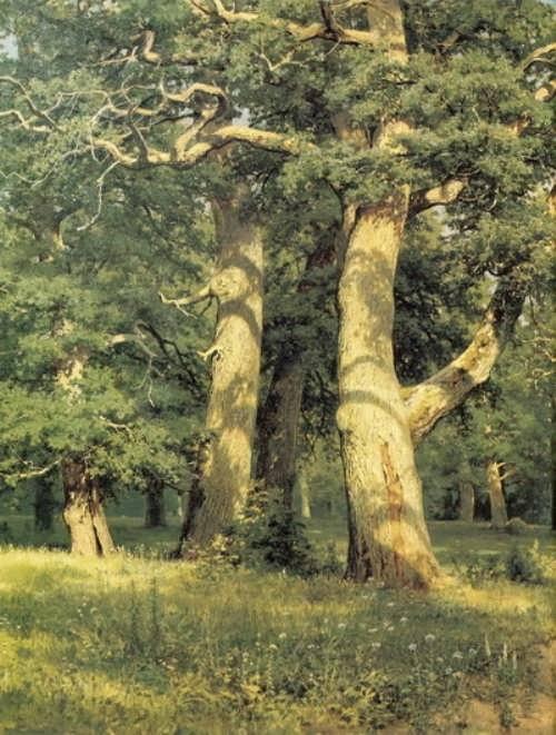 Ivan Ivanovich Shishkin. Oak trees. Evening