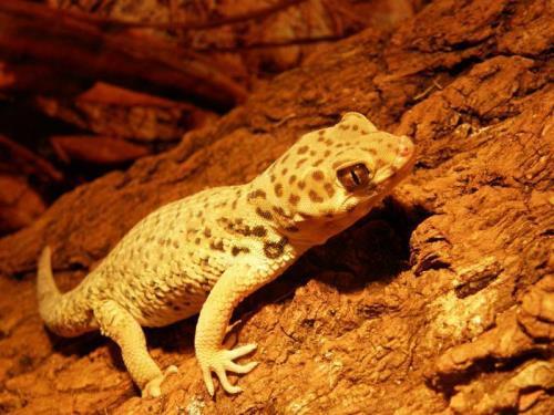 Lovely gecko