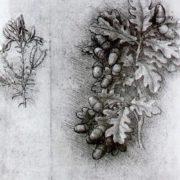 Oak branch with acorns by Leonardo da Vinci