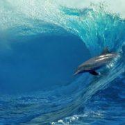 Stunning dolphin