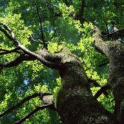 Amazing elm