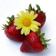Amazing strawberry