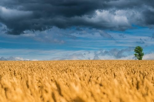 Amazing wheat. Photo by Jonathan Coe