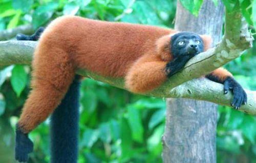 Attractive sloth