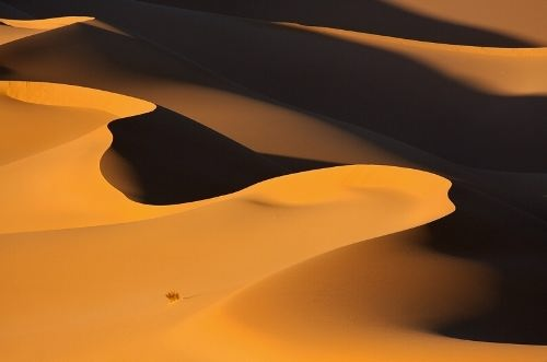 Awesome Sahara. Photo by Victoria Rogotneva