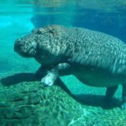 Awesome hippopotamus