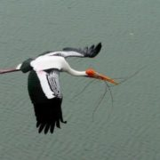 Awesome stork