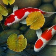 Beautiful koi. Artist Terry Gilecki
