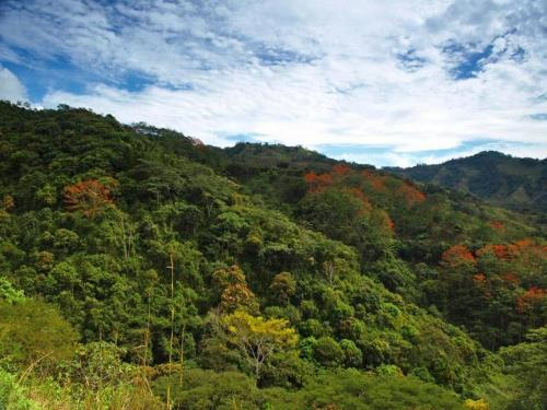Caribbean National Forest