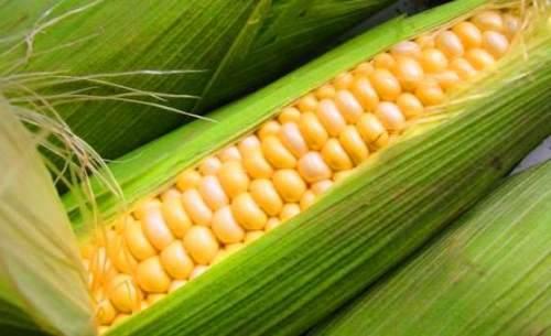 Charming ear of corn