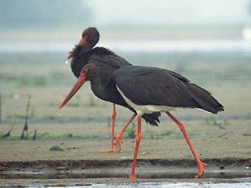 Charming storks
