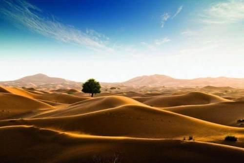 Desert of Rub Al Khali, or Empty Quarter