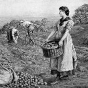 Edith Martineau. The Potato Harvest. 1888