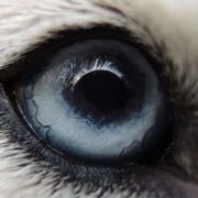 Faithful look of the dog