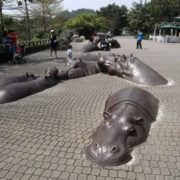 Figures of hippos in the zoo of Taiwan