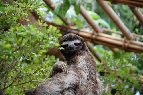 Gorgeous sloth