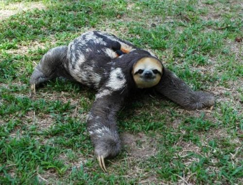 Graceful sloth