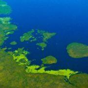 Ibera Wetlands