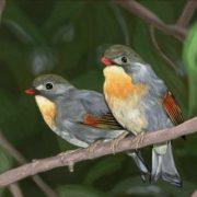 Interesting nightingales